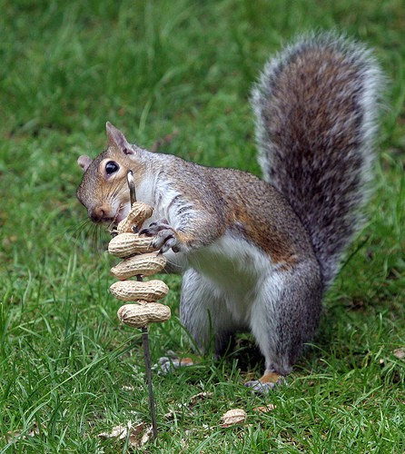 Cyril the squirrel up for a challenge 15:54:50