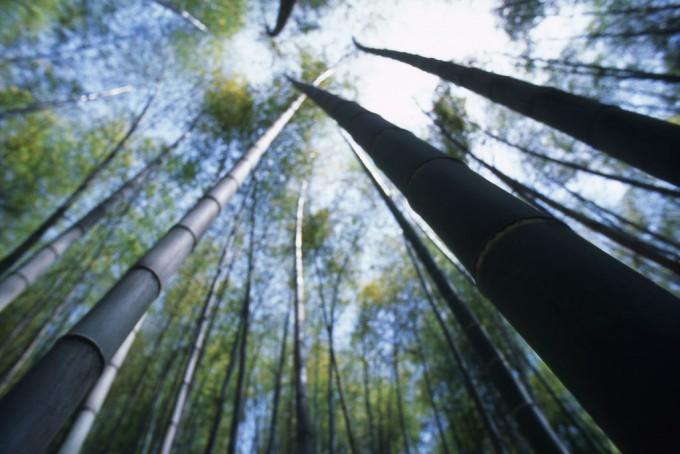 空高く伸びる竹