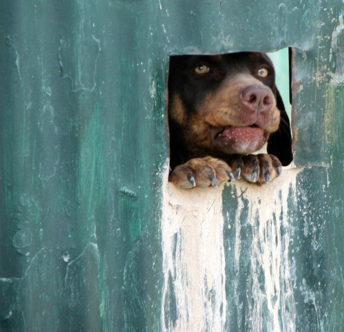 peek-a-boo dog
