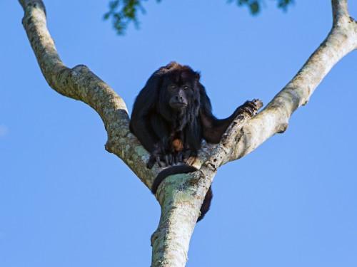 木の枝に猿がいる