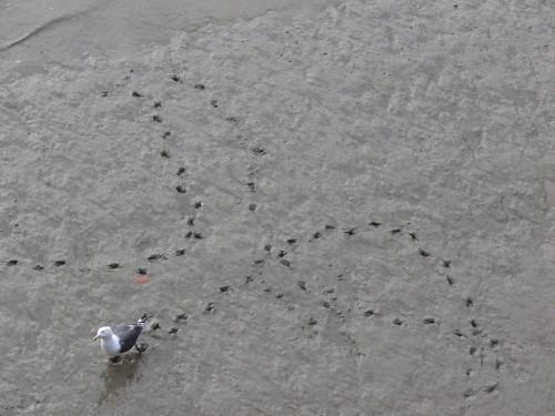 鳥とその足跡