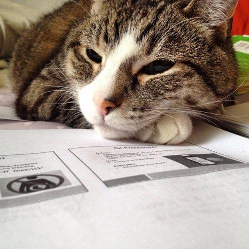 cat-presentation