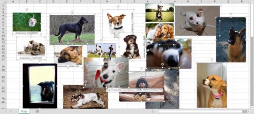 犬画像を全て選択
