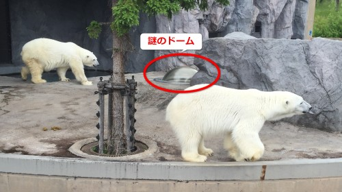 旭山動物園シロクマの謎のドーム