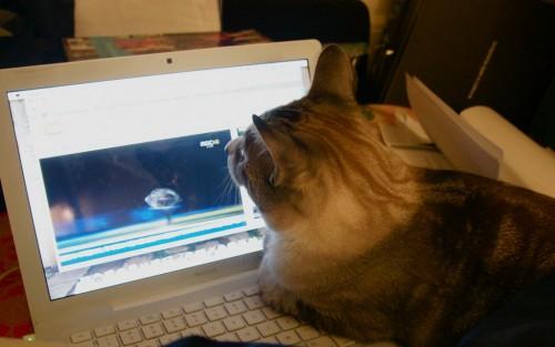 働いている猫